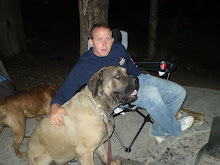 Atlas-English Mastiff