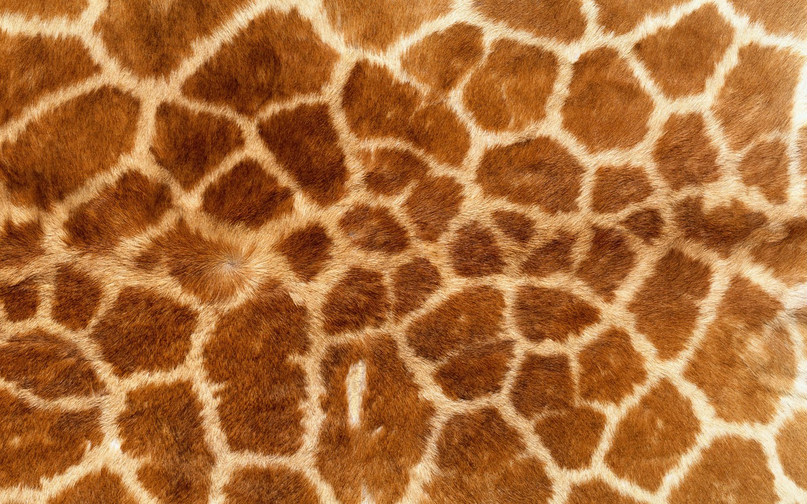 animal skin patterns giraffe -#main