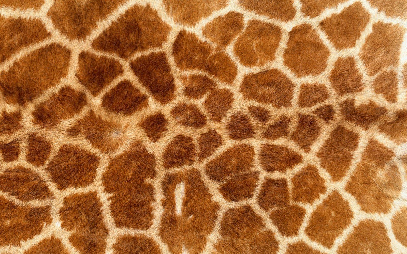 animal skin patterns - photo #8