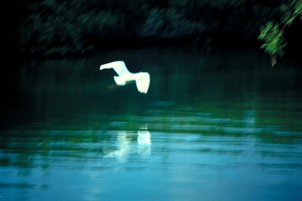 white bird thomas firak