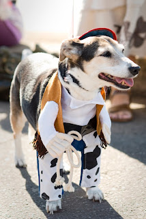 Photograph of a Dog Dressed as a Cowboy