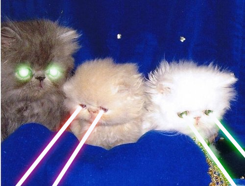 Can A Laser Pointer Blind A Cat