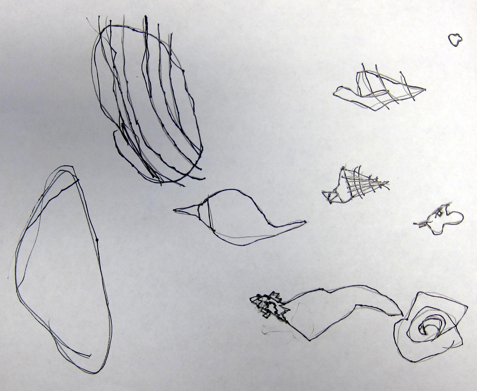 Contour Line Drawing Shell : Art is basic teacher contour line shells