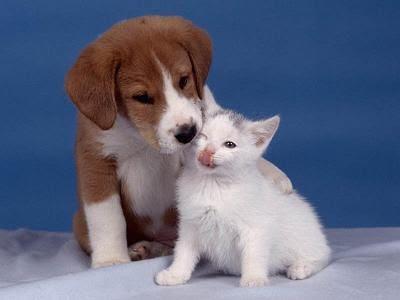 Ni los perros son felices cuando mueven la cola ni los gatos al ...
