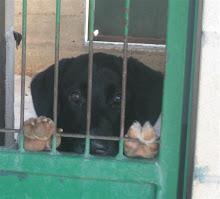 No compres  ¡Adopta!