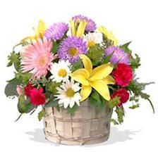 kır çiçeği