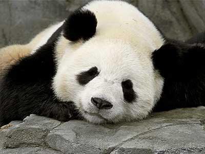 panda.bmp