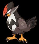 starraptor