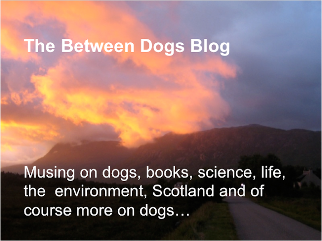 The between dogs blog