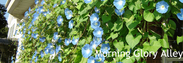 Morning Glory Alley