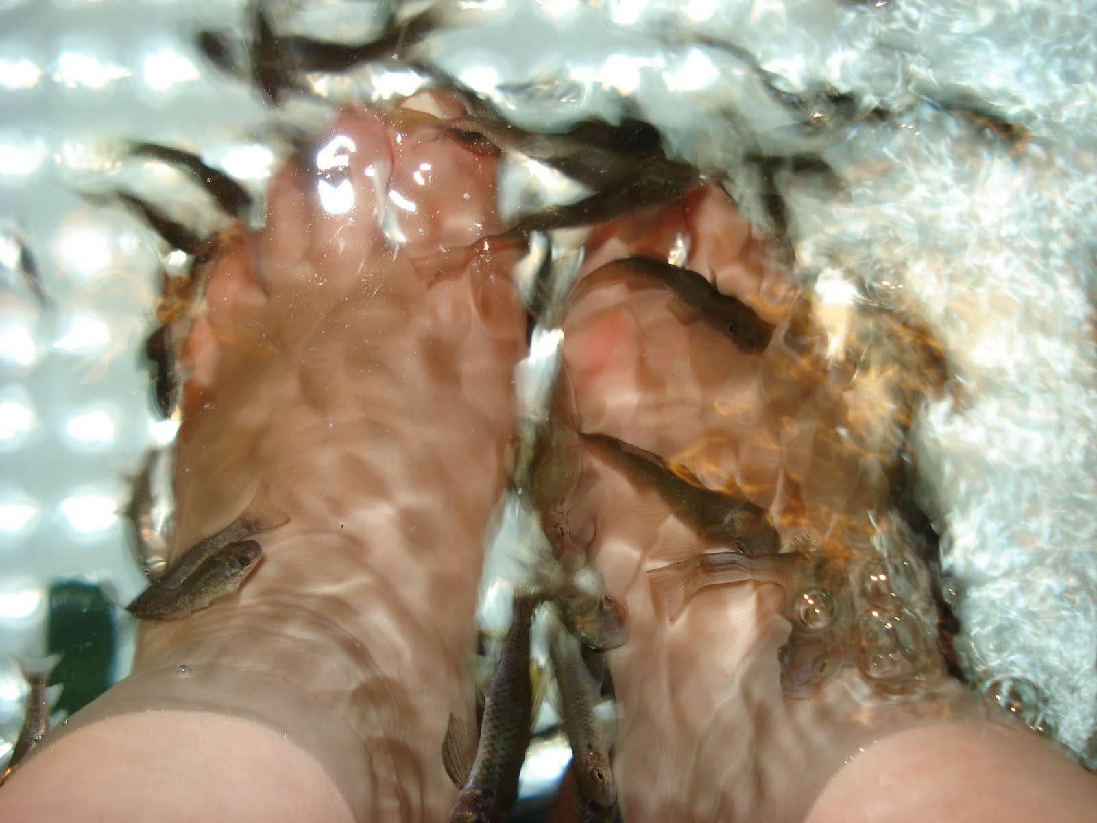 Fish Pedicure Virginia Beach