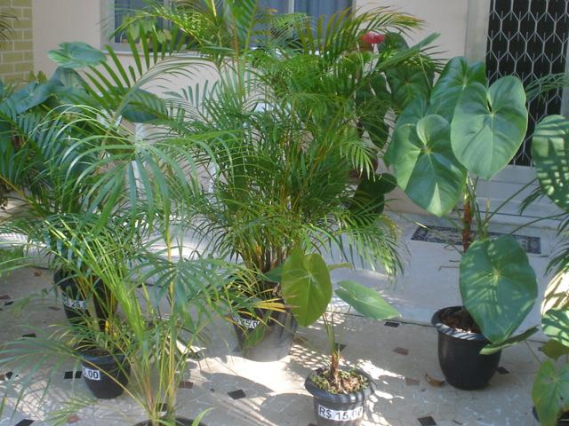 flores de jardim tipos: extensa variedade de plantas e flores que com um pouco de carinho