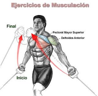 1000 ejercicios para tener buen cuerpo