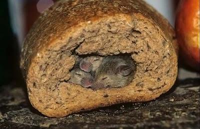 Pan relleno de rata