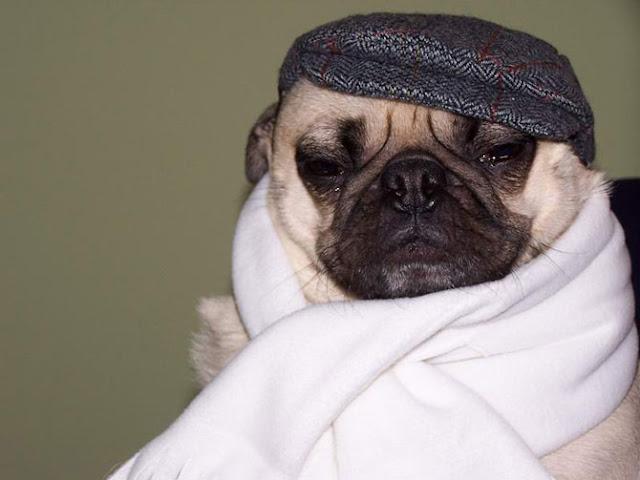 Perros Vestidos - Perros Con Ropa