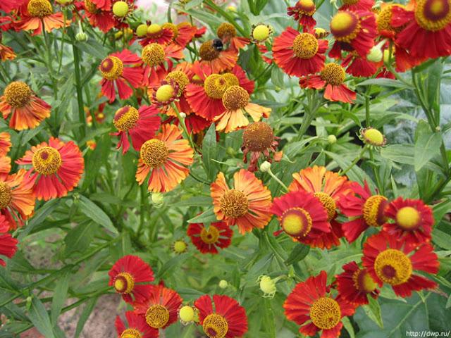Fotos de Hermosas Flores 7