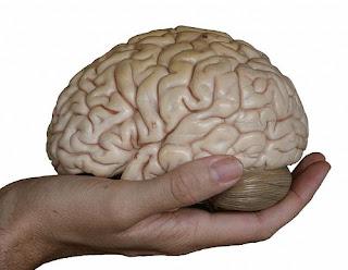 'Cerveja' pode tratar trauma no cérebro