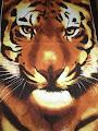 Diseño de tigre para salón de karate