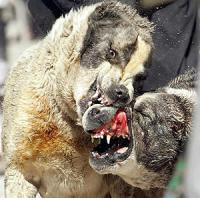 gato atacado por un perro