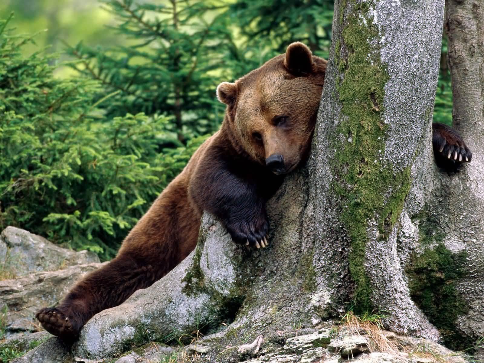 http://1.bp.blogspot.com/_1GkCvCvyjAg/TN7kypNaqvI/AAAAAAAAABg/duUqguL3-vM/s1600/Rest_Stop_Brown_Bear-1600x1200.jpg