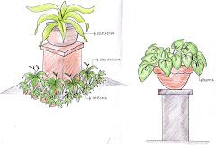 tanaman pot