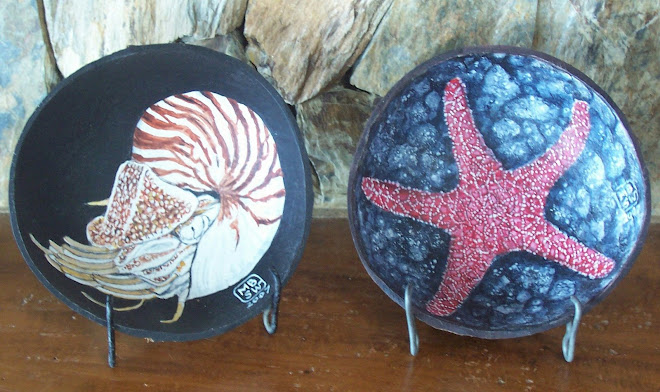 Nautilus and Starfish
