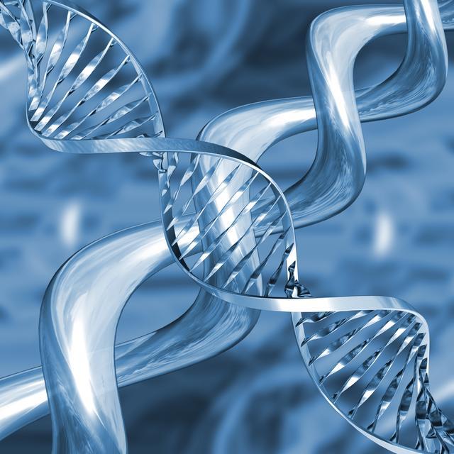 Contoh DNA