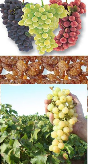 ANGGUR KISMIS RAISIN GRAPE