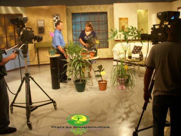 Mantenimiento y dise o de jardines marzo 2010 for Programa diseno jardines