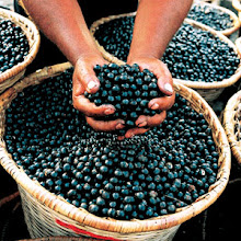 The ACAI BERRY from the BRAZILIAN RAIN FOREST