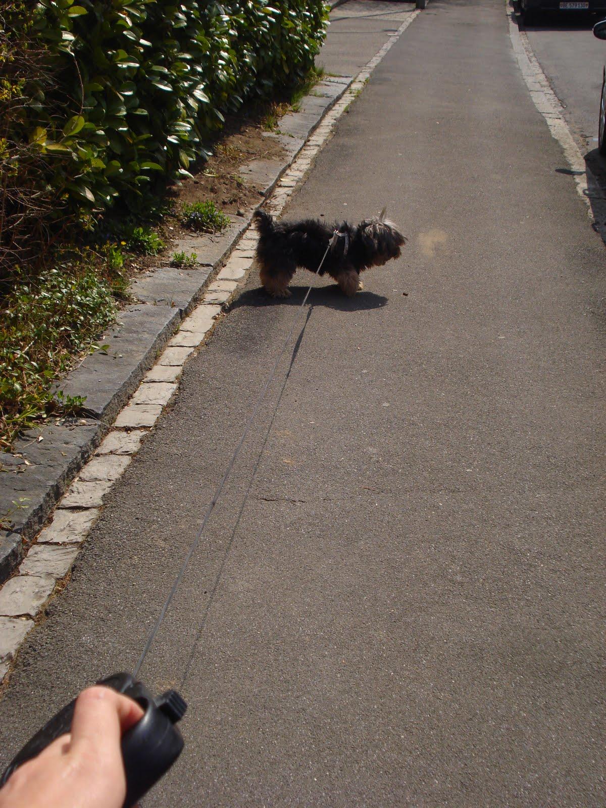 Ele sempre vai láá na frente quase me carregando no mais esticado  #4D5B25 1200x1600 Banheiro Cachorro Grama