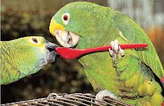 Δύο ερωτευμένοι παπαγάλοι