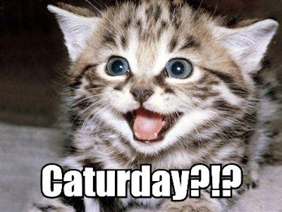 it s caturday