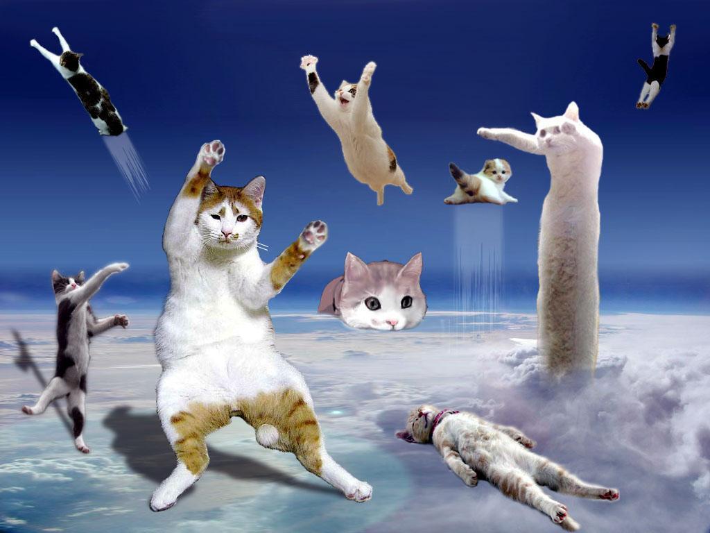 [cat_universe.jpg]