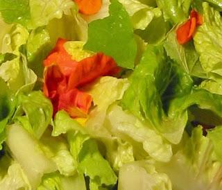 salad+sq+01+copy Pasta with Creamy Ramp Sauce & Spring Salad