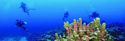Mauritius Hotels,diving in Mauritius