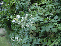 Blackberry bramble, by Anthony Appleyard - public domain