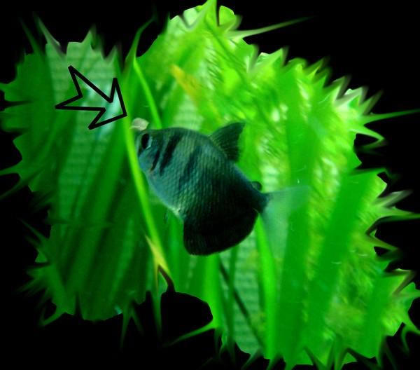 Bienvenue dans notre aquarium la nourriture de nos for Nourriture poisson rouge pour une semaine