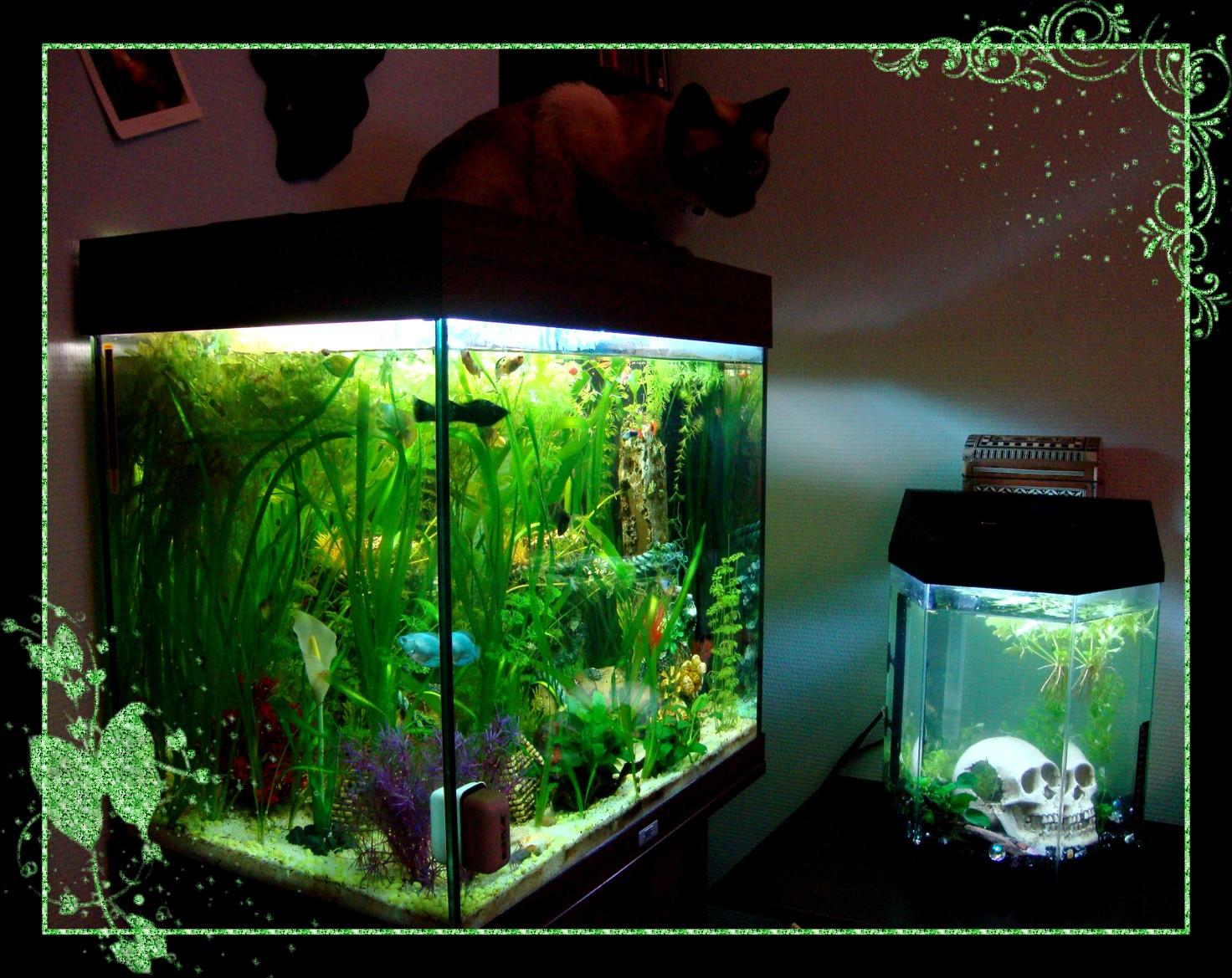Bienvenue dans notre aquarium aquarium communautaire for Plante whisky