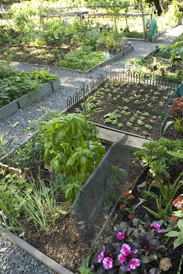 Kohlrabi And Orchids. Taro And Roses. Ung Choi, Chayote And Daikon. These  Are Growing Side By Side In Downtown Honolulu At The Foster Community Garden,  ...
