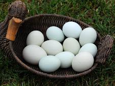 """""""Grüne"""" Eier"""