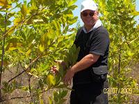 Dexter Dombro with Acacia mangium