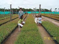 Tropical tree nursery in Vichada, Colombia