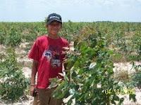 Dagan Dombro in a newly planted Eucalyptus pellita plantation