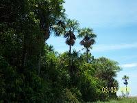 Lush rain forest but poor soil