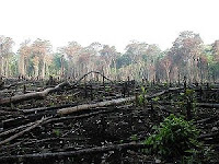 Rain Forest Deforestation in Mexico