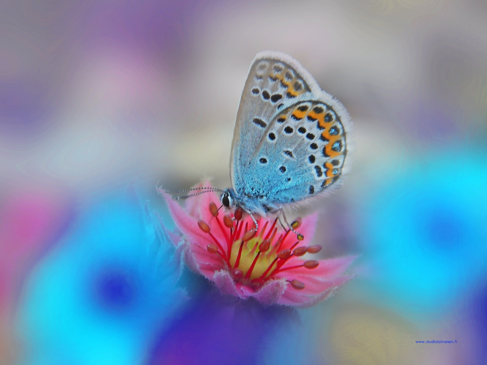 Mitä perhoset syö
