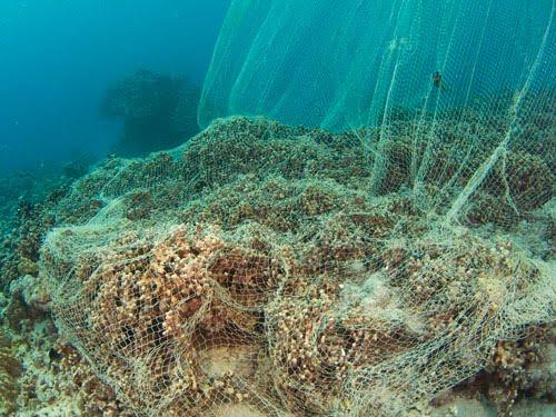 extinction risks for coral reefs essay