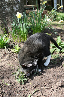 A little dirt, a little nip=heaven