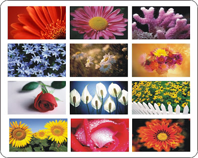wallpapers de flores. Wallpapers de Flores com